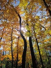 Photo: Sunlight through golden trees at Hills and Dales Park in Dayton, Ohio.