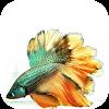 Betta Fish Wallpapers APK