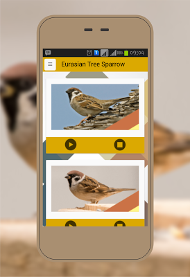 Eurasian Tree,Chipping Sparrow - screenshot