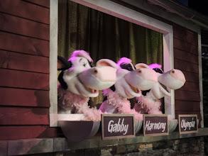 Photo: Singing Cows - Chocolate World - Hershey PA