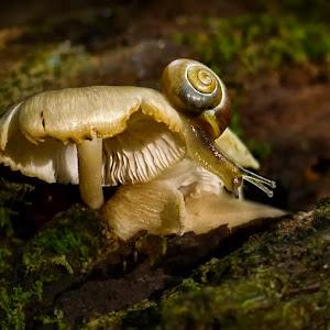 snail-shroomsP1840461-1050.jpg