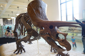 Photo: Dinosaur at the Natural History Museum