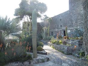 Photo: Cactus garden, Aci Castello castle