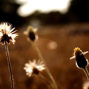 by Mahesh Thiru - Nature Up Close Flowers - 2011-2013