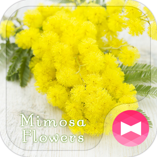 Cute Theme-Mimosa Flowers- Icon