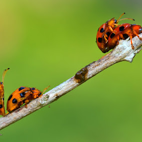 Wild Race by Irfan Marindra - Animals Insects & Spiders ( macro, bugs )