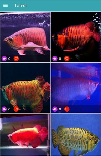 Download Arowana Fish 3d Wallpapers Apk Latest Version For Android