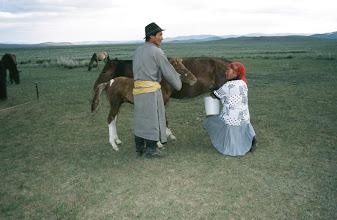 Photo: 03162 ブルド/ハスバータルイ家/馬乳をしぼる/一日に6回、2時間おきに搾乳