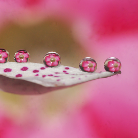 Floral Beauty........... by Aroon  Kalandy - Abstract Water Drops & Splashes