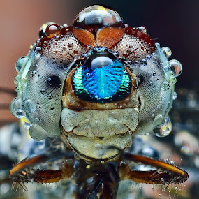 by SweeMing YOUNG - Animals Insects & Spiders