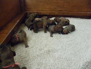 Photo: ze groeien als kool