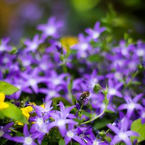 My Garden In Bloom by Júlio Alves - Nature Up Close Flowers - 2011-2013 ( jardim, púrpura, pwcflowergarden, purple, flores, blue, flowers, flor, garden, azul, flower )