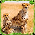 Furious Cheetah Family Simulator icon