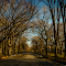 3582.jpg Central park Mar-15-3582.jpg