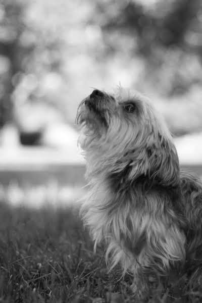 Kim Carr - Pet and Lifestyle Photography