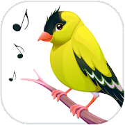 Bird Calls, Sounds & Ringtones
