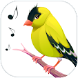 Bird Calls,.. file APK for Gaming PC/PS3/PS4 Smart TV