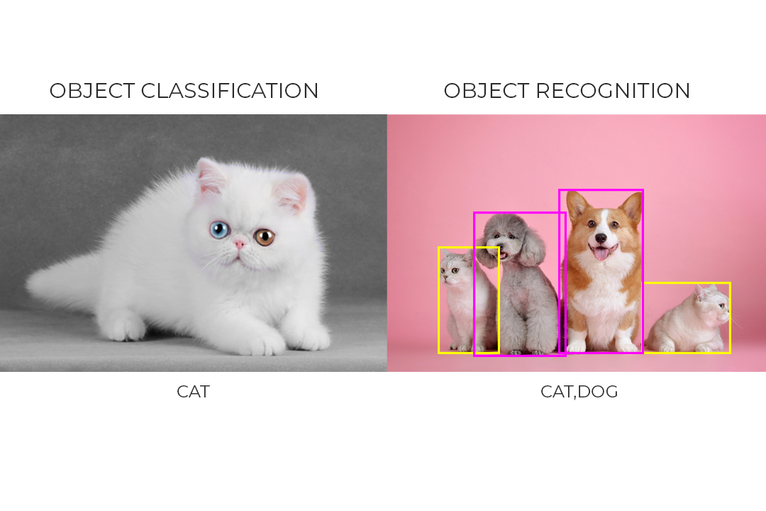 object classification vs object detection