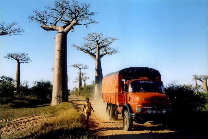 Baobab Avenue di Greysky