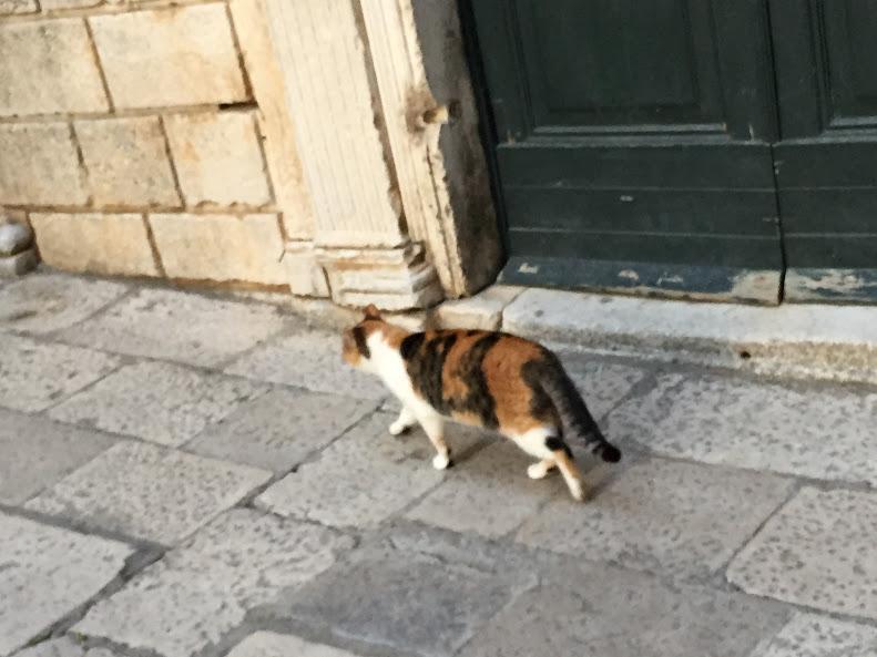 ドゥブロヴニク旧市街 野良猫