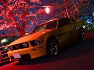 マスタング GTカリフォルニアスペシャル2008のカスタム事例画像 aya19mさんの2020年03月02日23:51の投稿