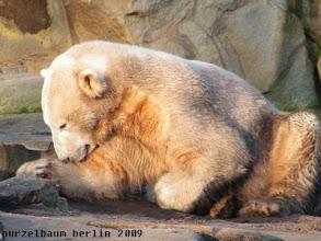 Photo: Fellpflege - Knut macht sich fein :-)
