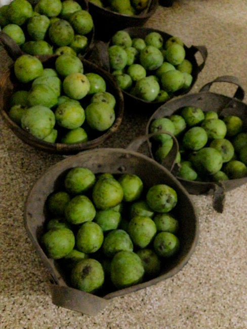 Green Mangoes.jpg