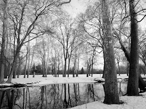 Photo: Black and white photo of trees reflected in a winter pond at Eastwood Park in Dayton, Ohio.