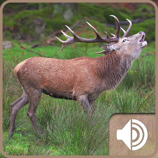 Deer Sound