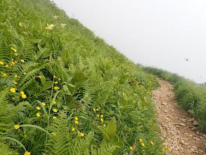 登山道脇はお花畑