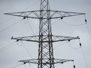 Photo: 1 Jul 13 Priorslee Lake: Two Buzzards act as 'bookends' on the middle cross-bar of the pylon. (Ed Wilson)