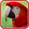 Parrots Live HD Wallpapers icon
