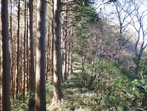 左側は植林帯