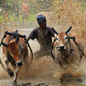 Dancing by Achmad Tibyani - Sports & Fitness Rodeo/Bull Riding ( world event, sport, pacu jawi )
