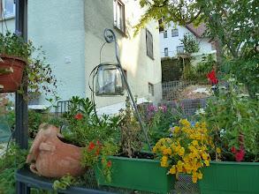 Photo: Blick aus dem Pavillon....... wir haben auch noch schöne Flecken im Garten.... Knuddelstunde mit unseren Havis.