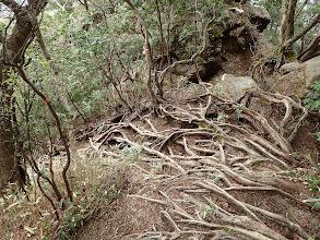 木の根の道を降りる