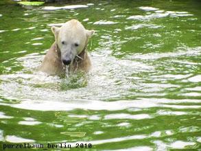 Photo: Knut holt sich erst ein Fischlein aus dem Wasser ;-)