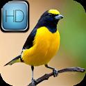 Harmonia dos Pássaros icon