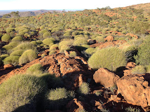 Photo: Plenty of spinifex up there