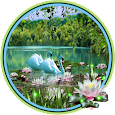 Swans and Lilies LWP apk