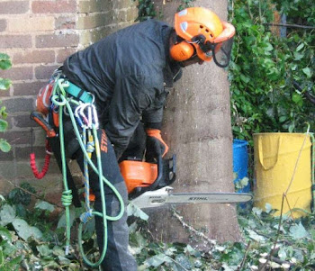 removing a tree in worcestershire
