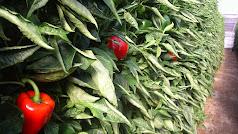 La provincia el líder en negocio agrícola en el exterior.