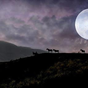 Moonrise sanctuary by Alan Crosthwaite - Landscapes Starscapes ( stallion, moon, horses, freedom, silhouette, horse, sanctuary, endangered, return to freedom, moonrise )