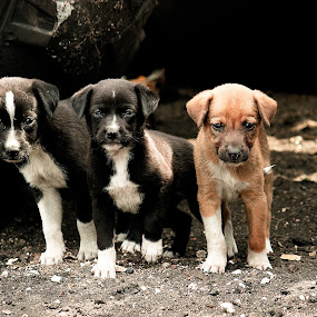 Stray Dogs..!! by Nirmal Kumar - Animals - Dogs Puppies