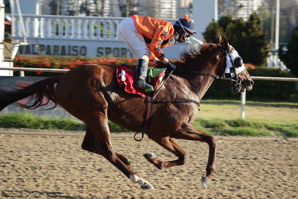 Cachador (Awesome Patriot) se quedó con la victoria en Handicap (1100m-Arena-VSC).