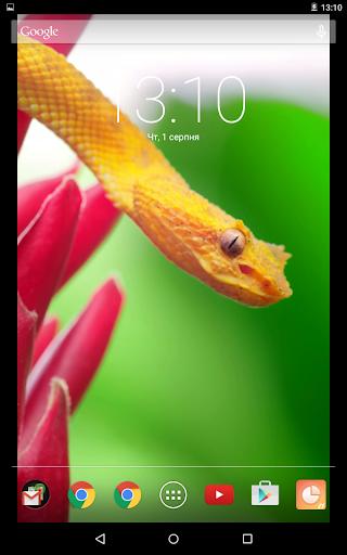 Orange Snake Live Wallpaper App Store