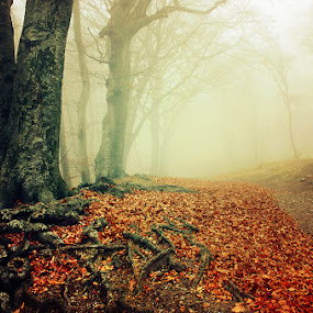 20151220-DSC_1104 by Zsolt Zsigmond - Landscapes Forests ( fog, autumn, roots, fall, trees, forest, leaves, mist )