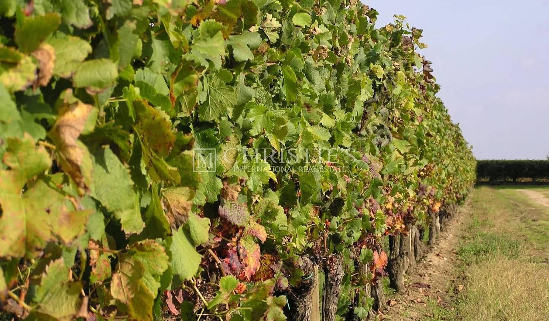 Vignoble Saint-Magne-de-Castillon