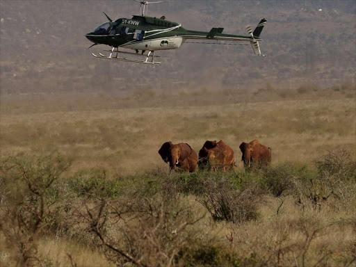 A Kenya Wildlife Service helicopter flies over elephants in the Tsavo National Park on March 15.