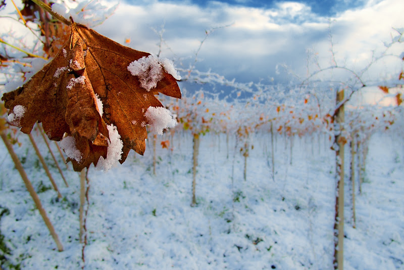 Il generale inverno di prometeo